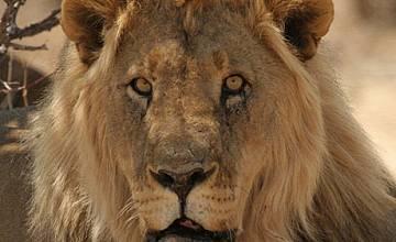 Големите котки завладяват Animal Planet през декември