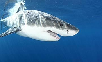 Септември е месецът на акулите по Animal Planet