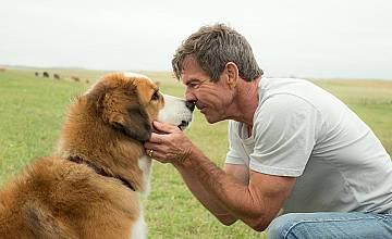 Кучешки живот | A Dog's Purpose (2017)