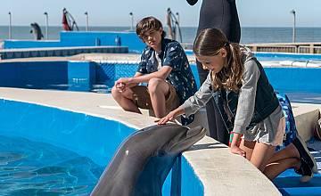 Делфинът Бърни | Bernie The Dolphin (2018)