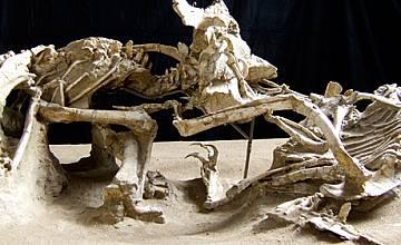 """""""Динозаврите са живи 3D"""" на гигантския екран на Mtel IMAX от 3 септември"""
