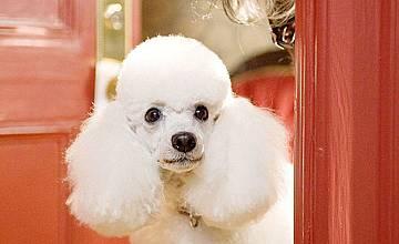 Хотел за кучета   Hotel for Dogs (2009)