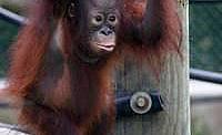 Animal Planet представя през май и юни планетата на приматите