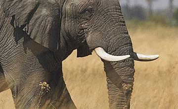 Animal Planet разкрива необятното разнообразие на земята с HD фотография