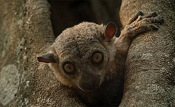 National Geographic посвещава специална програма на Деня на Земята