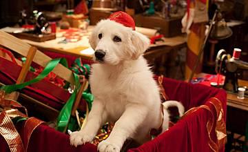 Коледни кутрета | Santa Paws 2: The Santa Pups (2012)