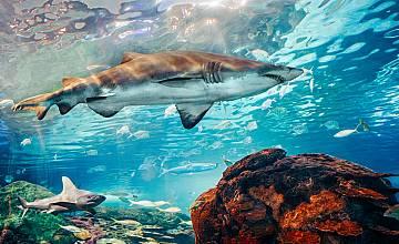 Седмицата на акулите стартира по Discovery Channel