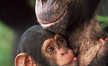 Тайният живот на маймуните