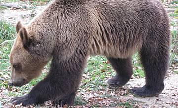 Убежище за мечки